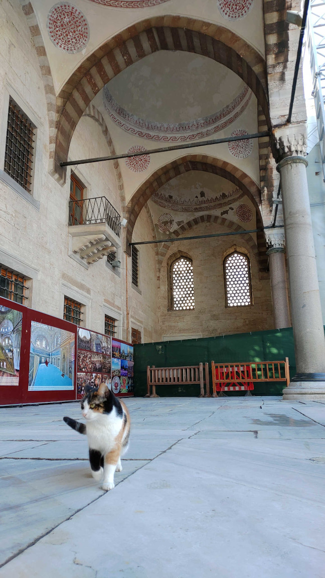"""Blue Mosque is my house, I'm a cool cat."""